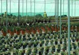 Qatar to plant 16,000 trees ahead of 2022 World Cup